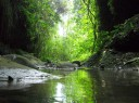 lorong hijau